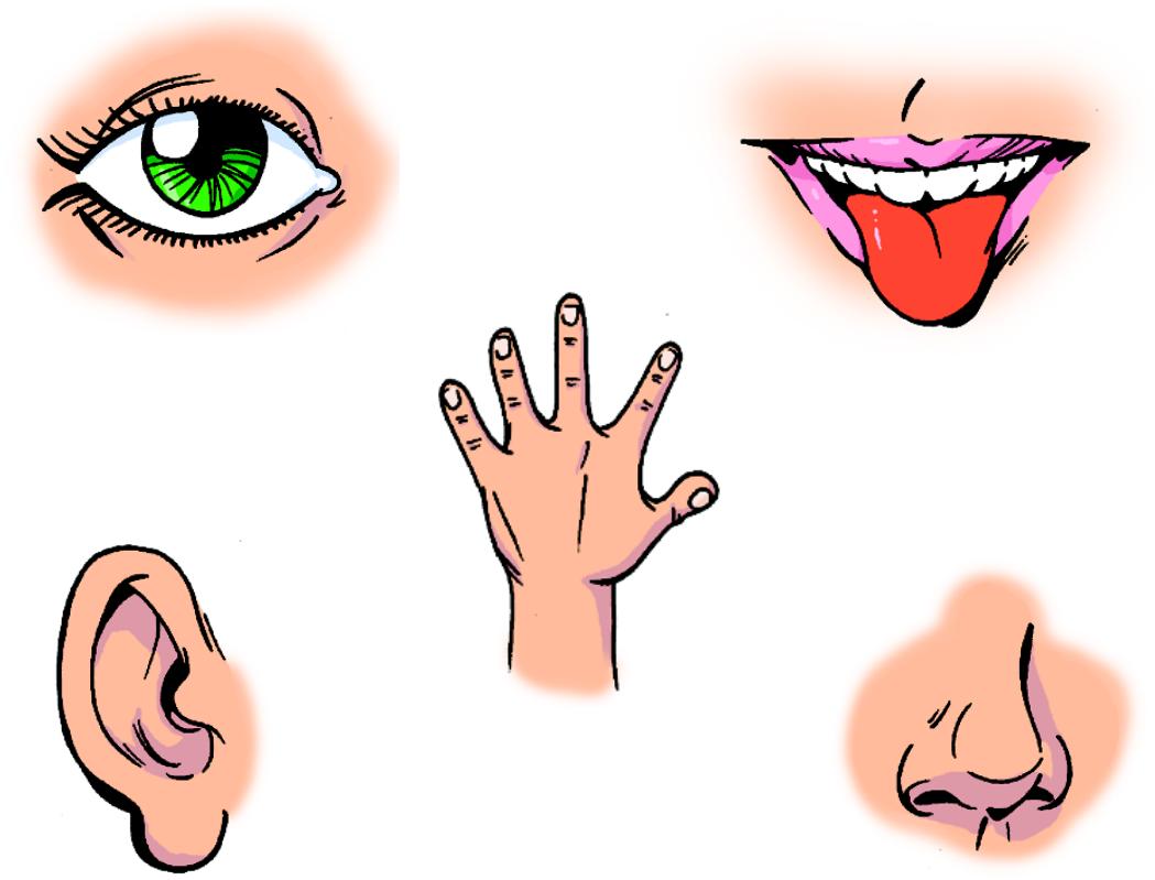 Metodolog a taller tic en educaci n infantil for El divan de los sentidos