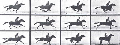 Descomponsición del Movimiento por Muybridge, 1878